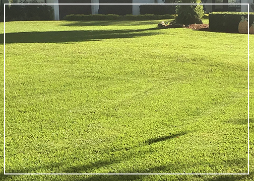 Lawncare services in Central Florida by Gutierrez & son